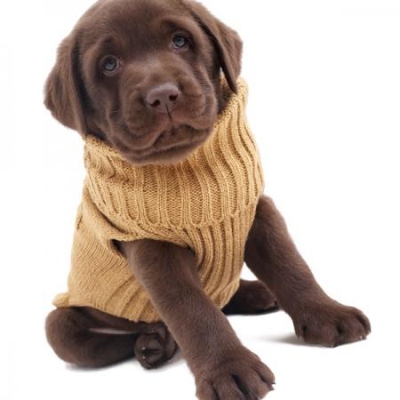 Hunde-Mäntel / Pullover