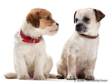 Kleinhunde