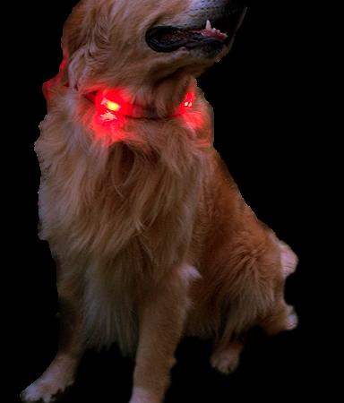 Leucht-Halsbänder