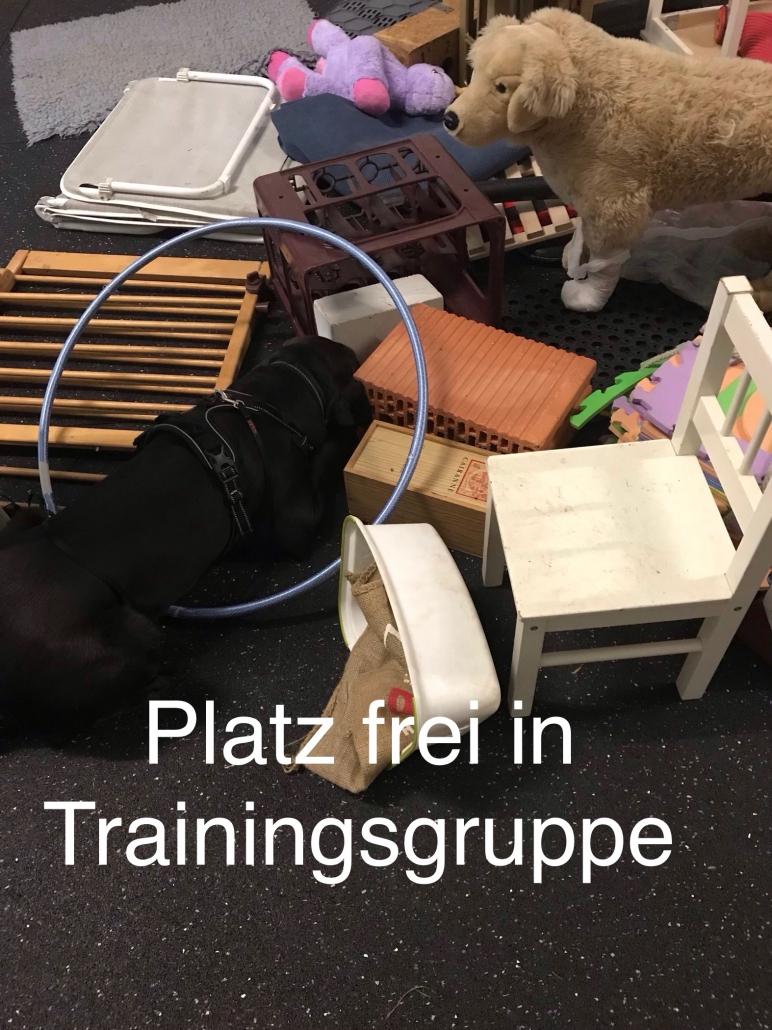 Freier Platz in ZOS-Trainingsgruppe