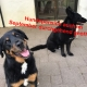 Hundepension im ganzen September geöffnet